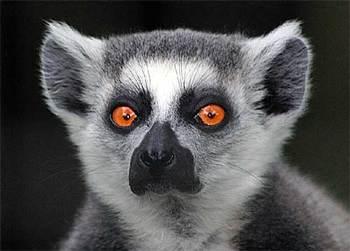 Lemure1