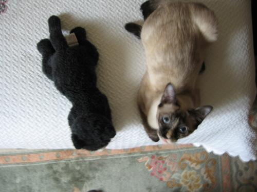 Deux_chats