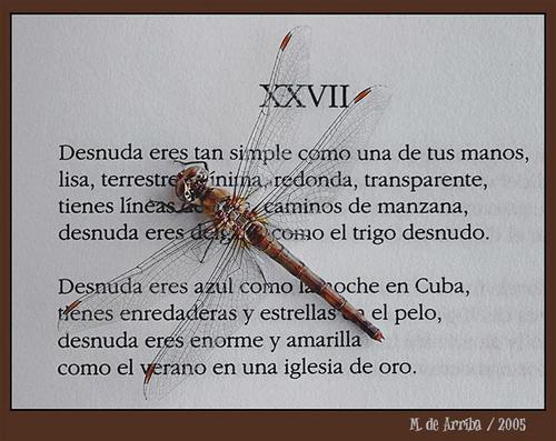 Insetto su Neruda